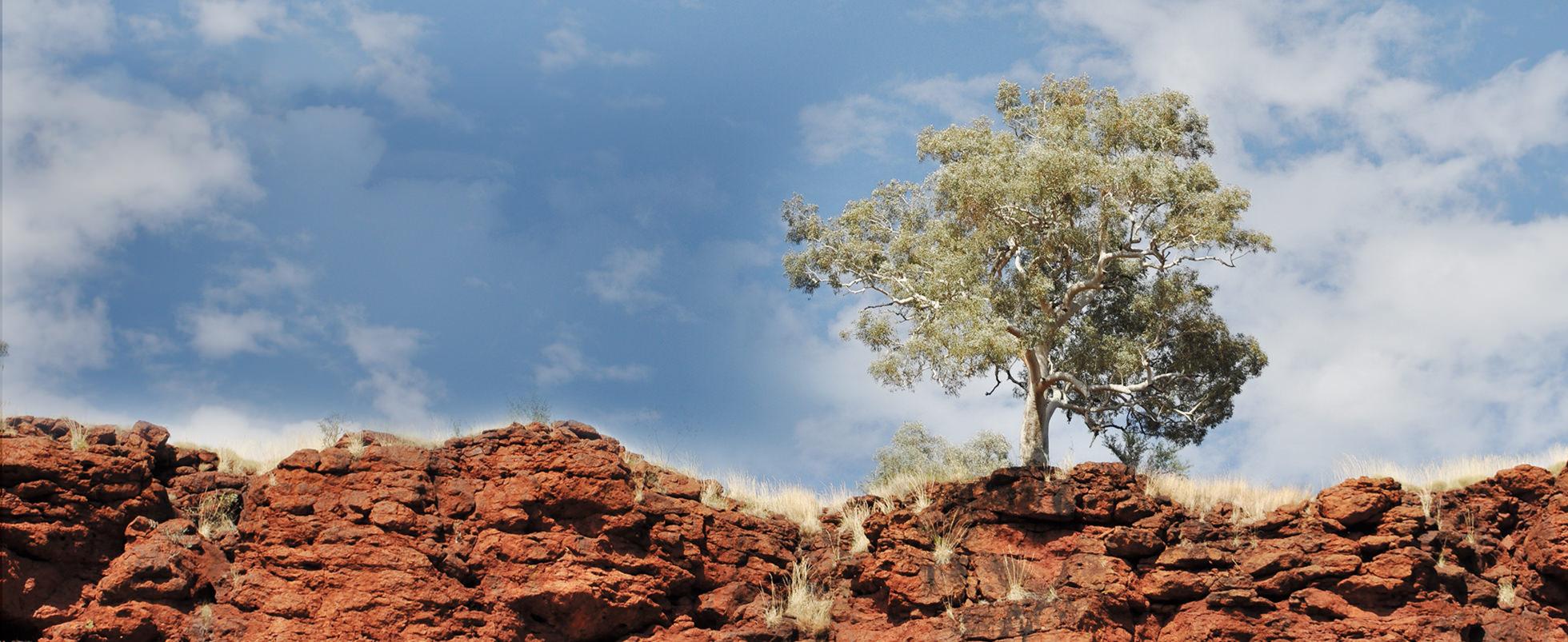 tree-on-cliff
